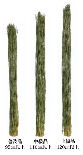 い草の長さ